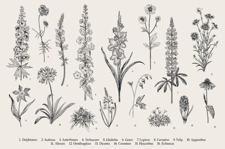 Garden flowers. Set. Vintage vector botanical illustration. Black and white Illustration