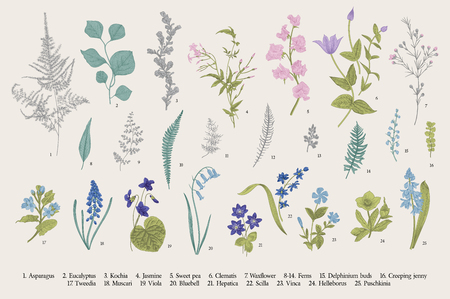 Frühlingsblumen und Farne. Einstellen. Botanische Illustration des Weinlesevektors. Vektorgrafik