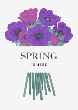 Le printemps est là. Carte de voeux. Fleurs pourpres. Vecteurs