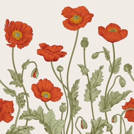 Vintage illustration. Seamless border. Red Poppies.