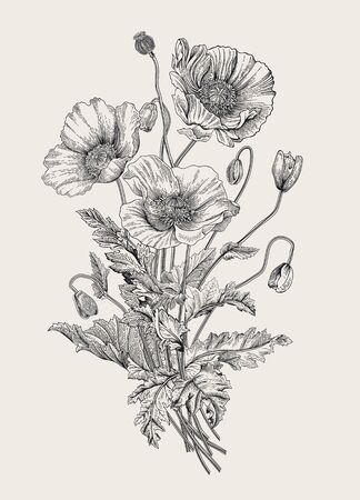 Vintage illustration. Bouquet. Poppies. Black and white 免版税图像 - 133949846