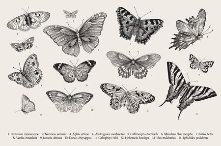 Papillons. Ensemble d'éléments pour la conception. Illustration classique vintage de vecteur. Noir et blanc Vecteurs