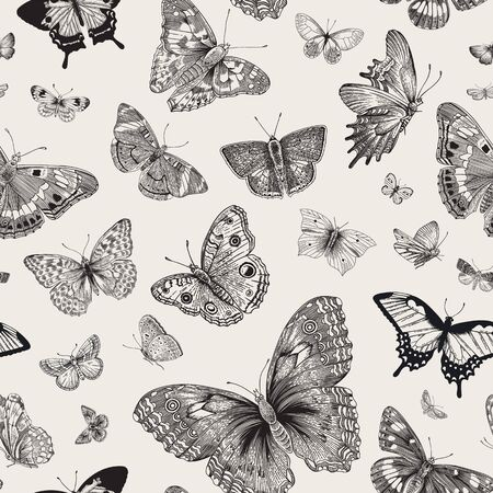 Butterflies. Seamless pattern. Vector vintage classic illustration. Black and white Banco de Imagens - 133951588