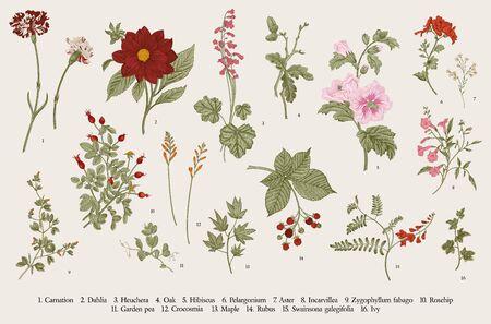 Botanische Illustration des Weinlesevektors. Satz. Herbstblumen. Bunt