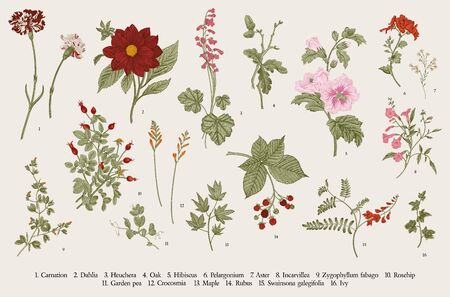 Vintage vector botanical illustration. Set. Autumn flowers. Colorful