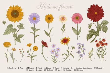 Vintage vector botanical illustration. Set. Autumn flowers. Colorful Фото со стока - 133951593