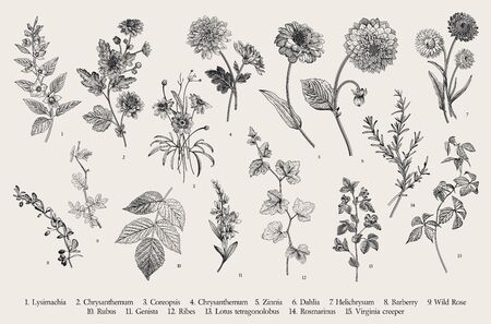Vintage vector botanical illustration. Set. Autumn flowers and twigs. Black and white
