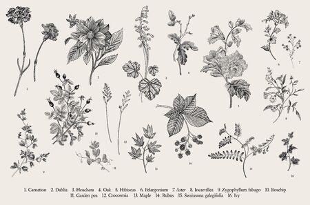 Ilustración botánica de vector vintage. Colocar. Flores de otoño. En blanco y negro