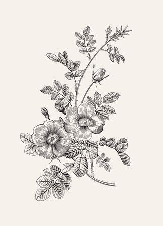 Hagebutte. Wilde Rose. Botanische Blumenvektorillustration. Schwarz und weiß Vektorgrafik