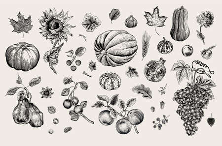 Happy Autumn. Harvest. Autumn botanical set. Vector vintage illustration. Black and white