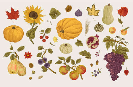 Happy Autumn. Harvest. Autumn botanical set. Vector vintage illustration. Colorful