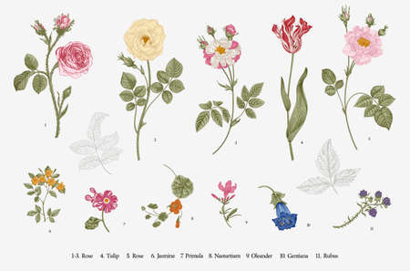 Flowers. Set. Botanical floral vector illustration.