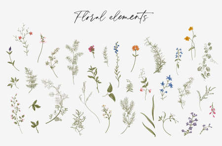 Flowers. Set. Botanical floral vector illustration. Color