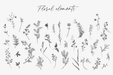 Flowers. Set. Botanical floral vector illustration. Black and white  イラスト・ベクター素材