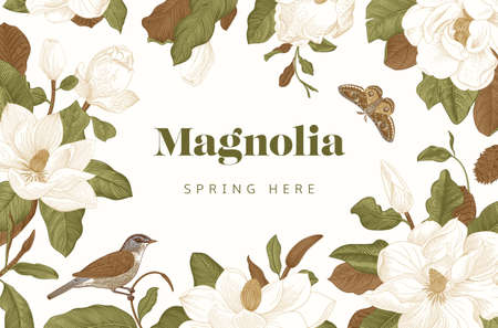 Magnolia. Spring here. Vector vintage botanical illustration. Horizontal card. Green and brown  イラスト・ベクター素材