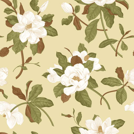 Magnolia grandiflora. Floral seamless pattern. Vector vintage botanical illustration.