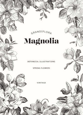 Magnolia. Spring flowers. Vector vintage botanical illustration. Invitation. Black and white