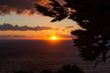 Beautiful golden sunset above the sea with a black silhouette of a tree