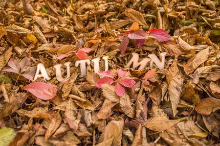 The word autumn on dry brown leaves