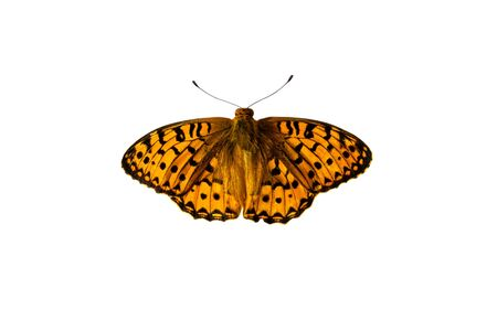 Butterfly isolated on white background with clipping path