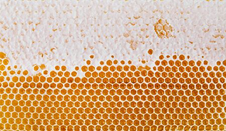 Honeycomb texture background. Top view. Bright yellow background. Honey cells.