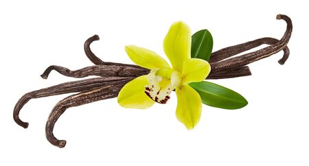 Vanilla pod, yellow flower and green leaf isolated on white background as package design detail
