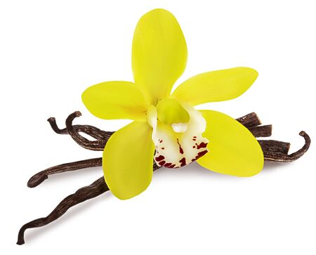 Vainilla aislado. Stick pila y flor de orquídea amarilla y frijoles secos aislado sobre fondo blanco como detalle de diseño de paquete