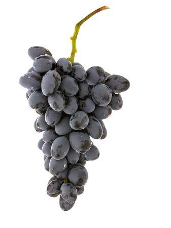 Uvas de vino bayas con gotas de agua aisladas sobre fondo blanco.