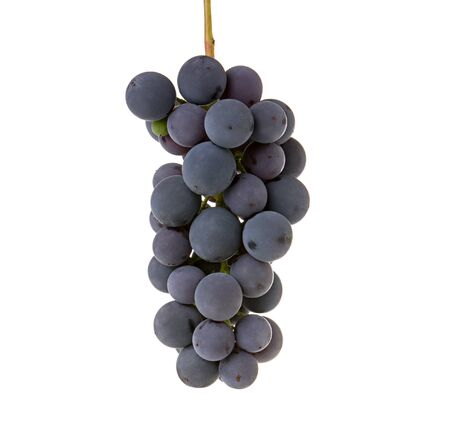 Grapes bunch isolated on white background. Ripe blue wine grape  berry on stem as  detail for packaging design Standard-Bild