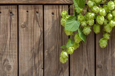 Cônes de houblon vert sur tige avec des feuilles sur fond de bois vertical comme cadre pour le brassage ou l'Oktoberfest, espace de copie Banque d'images