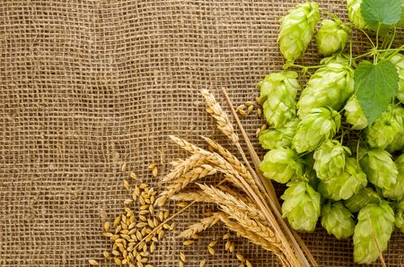 Hop cones, barley grain and wheat ears on burlap woven background with copy space for text, frame for brewing beer festival Oktoberfest