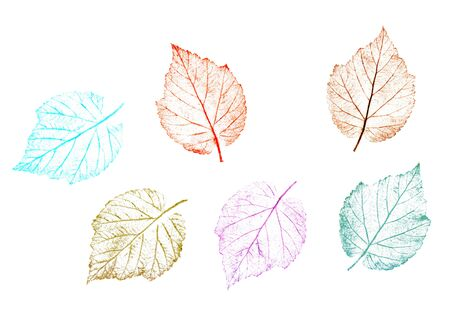 Multicolor tree leaves hand drawn with crayons. A natural element isolated on white background.