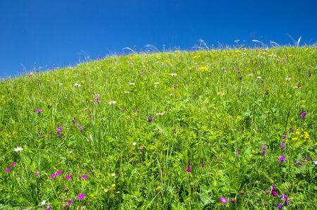 Alpine meadow landscape with blue sky, green grass and wild flowers Reklamní fotografie