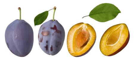 Plum fruit isolated. Whole prune set and half with green leaves on white background as detail for packaging design