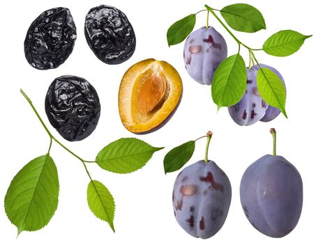 Plum fruit isolated. Set of whole fresh prune, half, green leaf on branch and dried plum on white background as detail for packing design