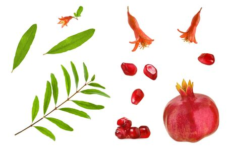 Pomegranate parts  isolated. Set of pomegranate grains, whole pomegranate, leaves, branch and flowers isolated on white background