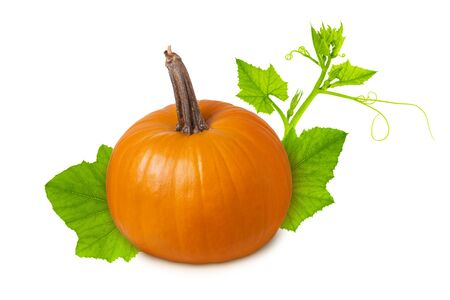 Pumpkin isolated. Yellow orange ripe whole pumpkin with green leaf and branch isolated on white background, healthy food ingredient or Halloween