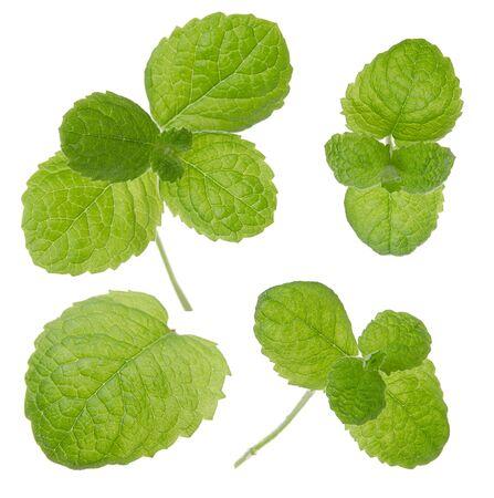Conjunto de hojas verdes frescas de menta aislado sobre fondo blanco.