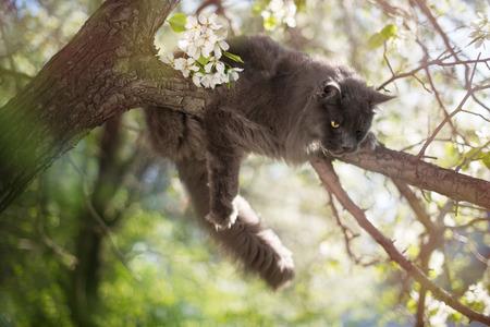 flowered: Fluffy cat sitting on flowered tree. Stock Photo