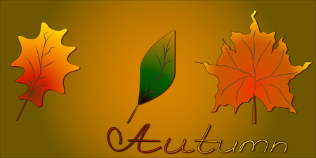 Set Autumn leaves,  can be used for wallpaper, design, card, invitation. Illustration