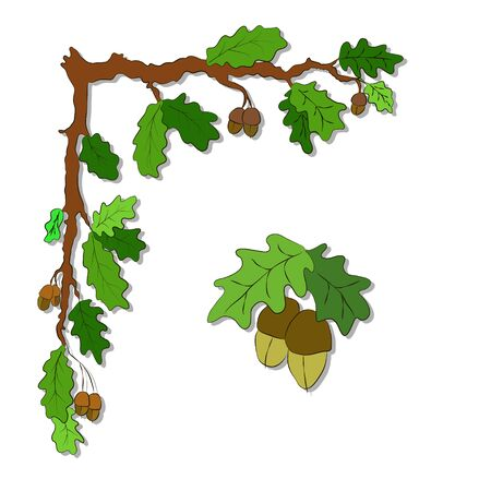 Illustration card with doodle  branches of oak with acorns on a white background.