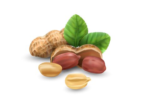 Peanuts in vector 3D illustration realistic. For packaging with peanut butter, nut mix. Vegetable protein for vegetarians, a useful product. Illustration