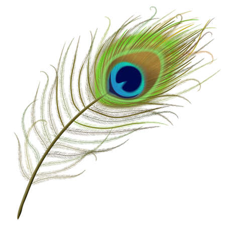 Peacock feather realistic in boho style. Luxury design.