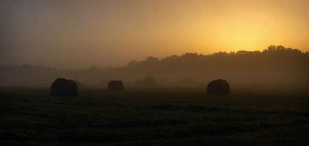 cut grass: Cut grass in a meadow in the mist before sunrise.