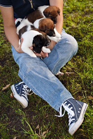 fox terrier puppy: Woman holds in hands puppy as smooth fox terrier. Family hunting dogs.