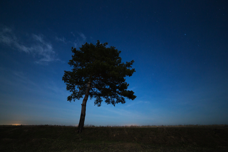 starry night: Coniferous tree on a background of the night star sky. The landscape is photographed by moonlight.