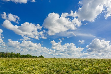 midday: A blue sky with clouds over a flowering meadow in summer.