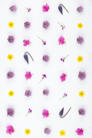 Top view of a flower composition on a white background. A pattern of flowering buds of garden plants and fern leaf.