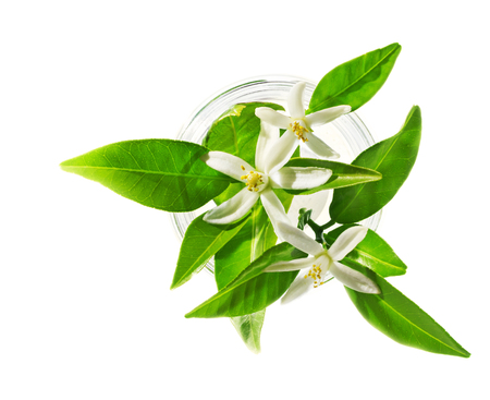 Neroli (Citrus aurantium) blossoms in glass, isolated on white, beauty spa concept. Reklamní fotografie - 80868031