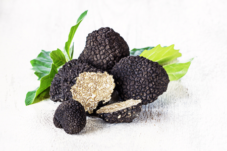 Black truffles on white background. Copy space. Reklamní fotografie - 80868087